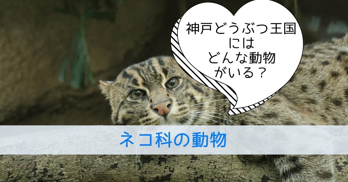 神戸どうぶつ王国にはどんな動物がいる?ネコ科の動物