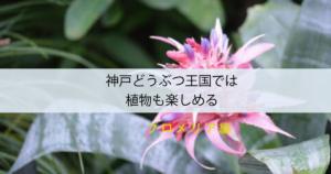 神戸どうぶつ王国では植物も楽しめる<タンクブロメリア編>