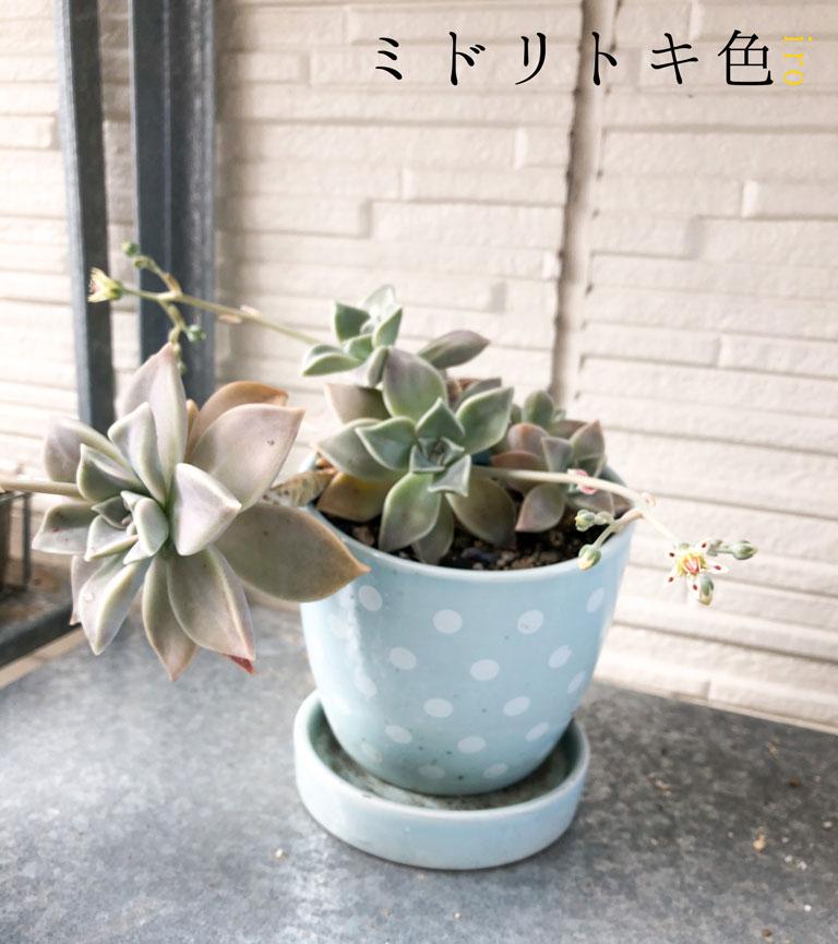 朧月の花/ミドリトキ色