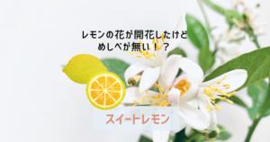 レモンの花が開花したけどめしべが無い!?