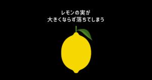 レモンの実が大きくならず落ちてしまう