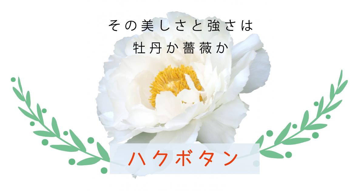 その美しさと強さは牡丹か薔薇か<白牡丹>
