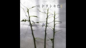 レモンの木の卵/ミドリトキ色