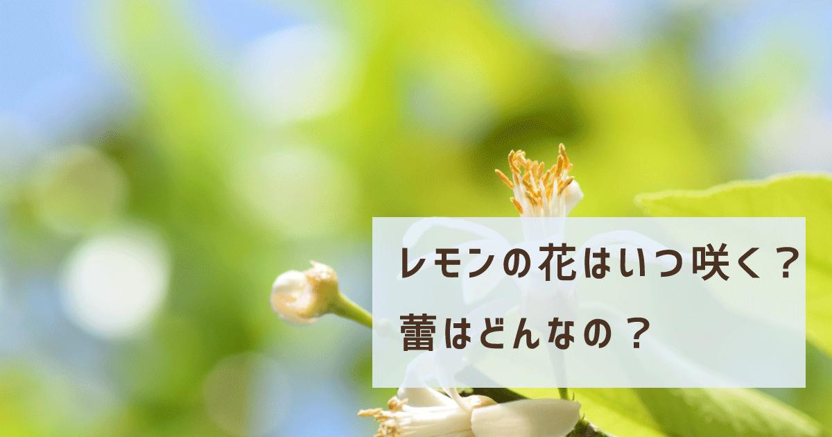 レモンの花はいつ咲く?蕾はどんなの?