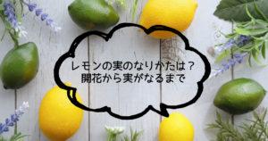 レモンの実のなりかたは?開花から実がなるまで
