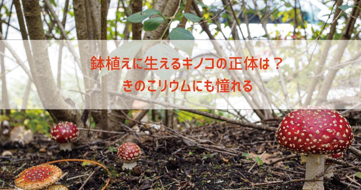 鉢植えに生えるキノコの正体は?きのこリウムにも憧れる